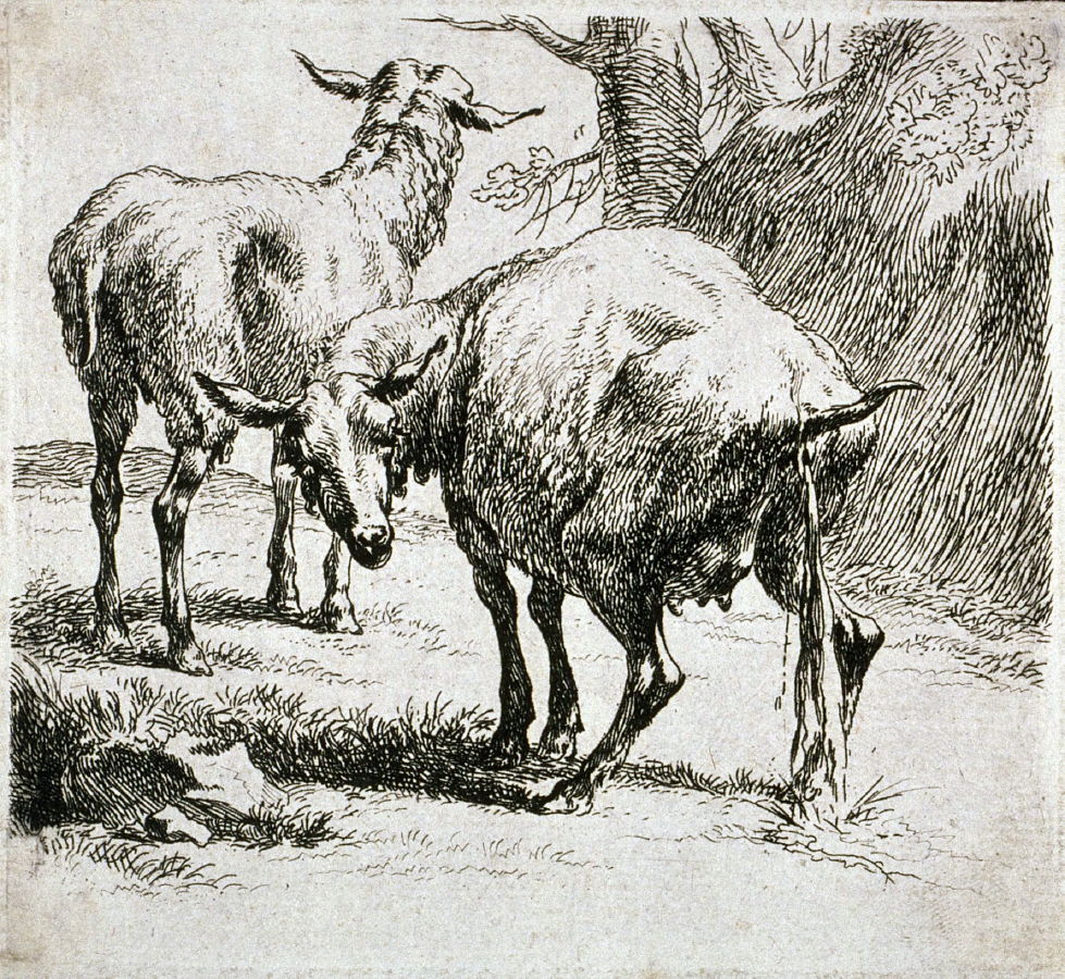 Etching from the set of sheep nicolaes pietersz berchem for Dujardin jerome