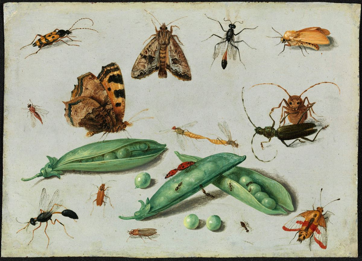 Peapods and Insects - Jan van Kessel II | FAMSF Explore the Art