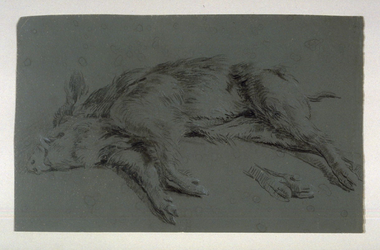 Figure and Animal Studies Recto: Dead Boar Verso: Anatomical drawing ...