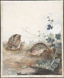 Untitled (Two Quail or Partridge)