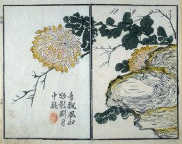 Chrysanthemum and Rock- from: The Mustard Seed Garden Manual of Painting, Volume II (on Orchids, Bamboo, Plums and Chrysanthemums)