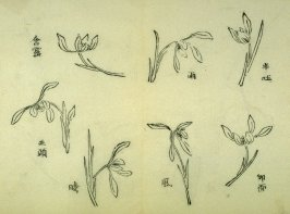 Ink study. Seven examples: outline, single blossoms - No.29 from the Volume on Orchids - from: The Treatise on Calligraphy and Painting of the Ten Bamboo Studio