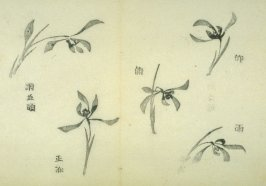 Ink study. Five examples: single blossoms - No.30 from the Volume on Orchids - from: The Treatise on Calligraphy and Painting of the Ten Bamboo Studio