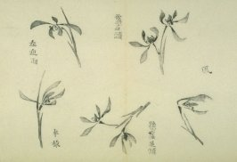Ink study. Five examples: one or two blossoms - No.34 from the Volume on Orchids - from: The Treatise on Calligraphy and Painting of the Ten Bamboo Studio