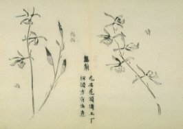 Ink study. Two examples: flowering stems - No.35 from the Volume on Orchids - from: The Treatise on Calligraphy and Painting of the Ten Bamboo Studio