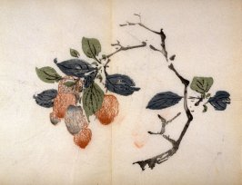 Curved Branch of Litchi Nuts, No.20 from the Volume on Miscellaneous Subjects - from: The Treatise on Calligraphy and Painting of the Ten Bamboo Studio