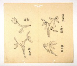 Ink study. Four examples: outline, two oe three blossoms - No.28 from the Volume on Orchids - from: The Treatise on Calligraphy and Painting of the Ten Bamboo Studio