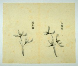 Ink study. Two examples: three and two blossoms - No.31 from the Volume on Orchids - from: The Treatise on Calligraphy and Painting of the Ten Bamboo Studio