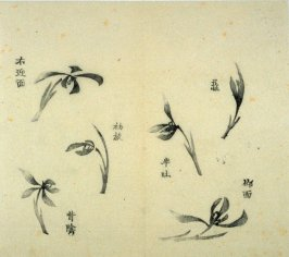 Ink study. Six examples: single blossoms - No.33 from the Volume on Orchids - from: The Treatise on Calligraphy and Painting of the Ten Bamboo Studio