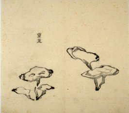 Ink study. Two Fungi - No.39 from the Volume on Orchids - from: The Treatise on Calligraphy and Painting of the Ten Bamboo Studio