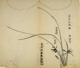 Ink study. The same as No.2, with two flowers added - No.3 from the Volume on Orchids - from: The Treatise on Calligraphy and Painting of the Ten Bamboo Studio