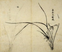 Ink study. The same as No.6, with two flowers- No.7 from the Volume on Orchids - from: The Treatise on Calligraphy and Painting of the Ten Bamboo Studio
