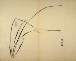 Ink study. Six leaves, one very short, growing toward right - No.4 from the Volume on Orchids - from: The Treatise on Calligraphy and Painting of the Ten Bamboo Studio