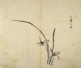 Orchid- One from the Volume on Orchids - from: The Treatise on Calligraphy and Painting of the Ten Bamboo Studio