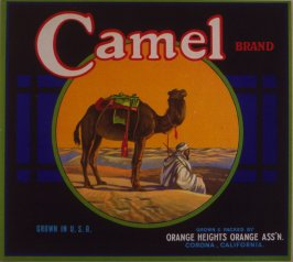 Orange crate label-Camel Brand