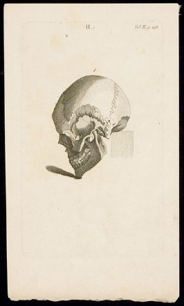 Untitled (Skull, Tipped)