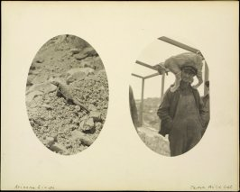 Verso:2-photographs: Arizona lizard ; tame wild cat (oval format)