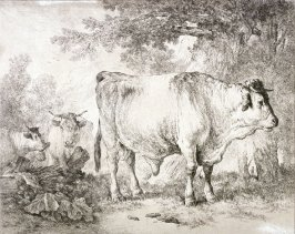 [Cows in a landscape]