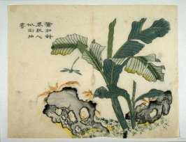 Pa-Chiao Shrub and Dragon-Fly - from: The Mustard Seed Garden Manual of Painting, Volume III (on Plants and Insects)