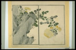 Chrysanthemum and Rock - from: The Mustard Seed Garden Manual of Painting, Volume II (on Orchids, Bamboo, Plums and Chrysanthemums)