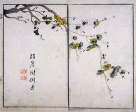 Plum Blossom - from: The Mustard Seed Garden Manual of Painting, Volume II (on Orchids, Bamboo, Plums and Chrysanthemums)