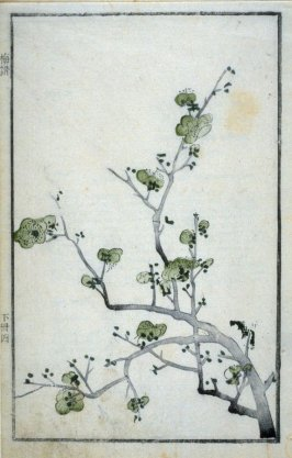 Plum Blossom- from: The Mustard Seed Garden Manual of Painting, Volume II (on Orchids, Bamboo, Plums and Chrysanthemums)