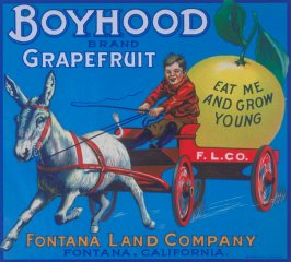 Boyhood Brand Grapefruit, Fontana Land Company, Fontana, California