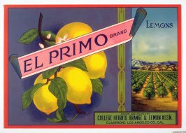 El Primo Brand Lemons, College Heights Orange & Lemon Assn., Claremont, Los Angeles Co. ,California