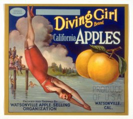 Diving Girl Brand California Apples, Watsonville Apple Selling Organization, Watsonville, California