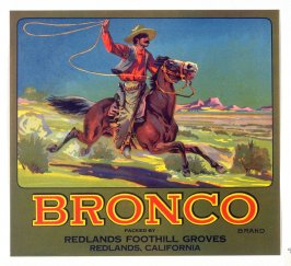 Bronco, Redlands Foothill Groves, Redlands, California