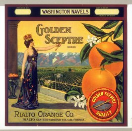 Golden Sceptre Brand Washington Navels, Rialto Orange Co., Rialto, San Bernardino Co., California