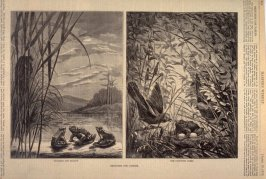 Sketches for Fables, from Harper's Weekly, (19 April 1873), p. 316