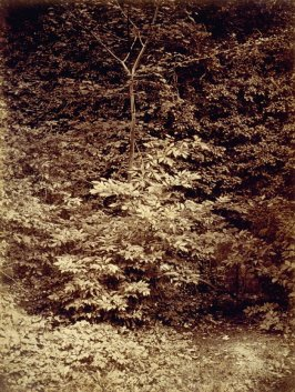 Untitled (Forest Scene)