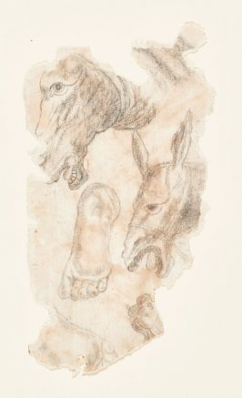 Sheet of Studies: Donkey Heads and a Man's Bare Foot