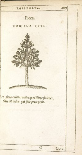 Cotonea (The quince), emblem 203 in the book Emblemata by Andrea Alciato (Antwerp: Plantin [under the direction] of Raphelengius, 1608)