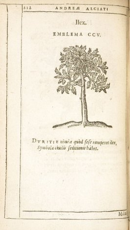 Malus medica (The citron), emblem 206 in the book Emblemata by Andrea Alciato (Antwerp: Plantin [under the direction] of Raphelengius, 1608)