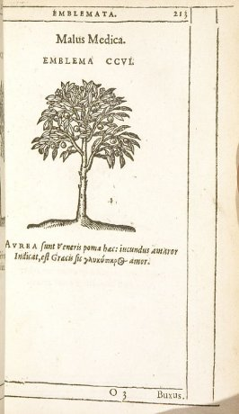 Buxus (The box-tree), emblem 207 in the book Emblemata by Andrea Alciato (Antwerp: Plantin [under the direction] of Raphelengius, 1608)