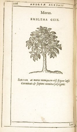 Laurus (The laurel), emblem 210 in the book Emblemata by Andrea Alciato (Antwerp: Plantin [under the direction] of Raphelengius, 1608)