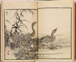A Picture Book of One Hundred Birds (Bairei hyakuchō gafu) (Tokyo: Ōkura Magobei, 1884), vol. 6