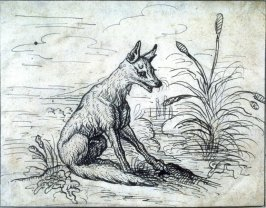 Seated Fox