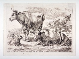 Sheep and cows in landscape, one cow being milked