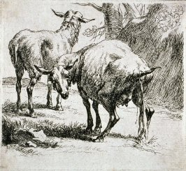 Etching from the Set of Sheep