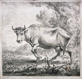[#6 from] Set of Six Etchings of Cattle (Cows)