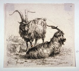 "Two Goats, from ""A Man's Sketchbook,"" a suite of eight prints /Animalia ad vivum delineata et aqua forti aeri impressa Studio et Arte Nicolai Berchemi/"