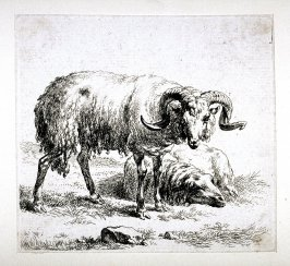 "Ram and Sheep, from ""A Man's Sketchbook,"" a suite of eight prints /Animalia ad vivum delineata et aqua forti aeri impressa Studio et Arte Nicolai Berchemi/"