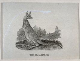 "The Kanguroo (sic) from ""History of Quadrupeds"" 2nd Ed. (1811)"