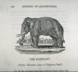 """The Elephant, from Bewick's """"History of Quadrupeds"""" (1824 ed.)"""