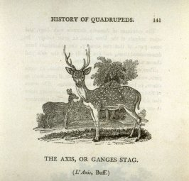 "The Axis or Ganges Stag from ""History of Quadrupeds"" 2nd Ed."