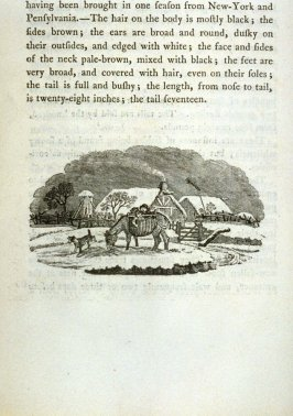 End piece vignette for section on the Sable on page 236 in the book A General History of Quadrupeds, The Figures Engraved on Wood by Thomas Bewick, 2nd edition (Newcastle upon Tyne: S. Hodgson, R. Beilby,T. Bewick, 1791)