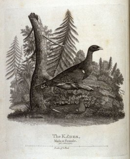 The Kader, opposite page 71 in the book A Tour through Sweden, Swedish -Lapland, Finland and Denmark by Matthew Consett (London: J. Johnson …, 1789)